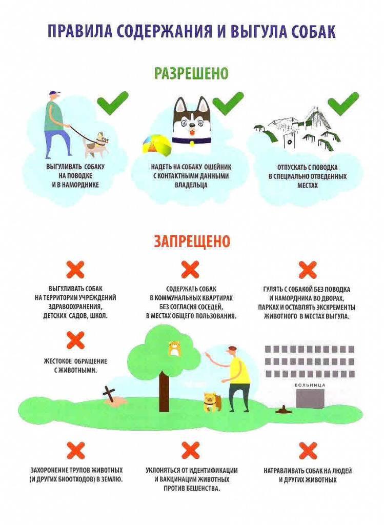 Собака в доме по православию ⛪ отношение церкви к собакам, собаки ангелы посланные для испытания человеческих душ, почему в православии собака считается нечистым животным