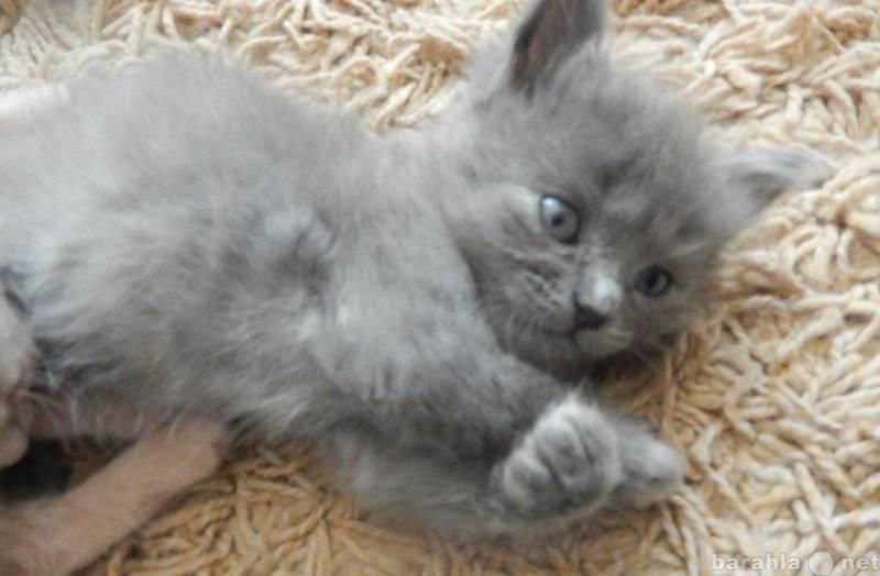 Кошка и дети: какую породу лучше завести для ребенка в квартиру