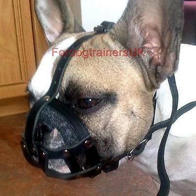 Намордник для собак - 110 фото применения и советы как приручить собаку к наморднику