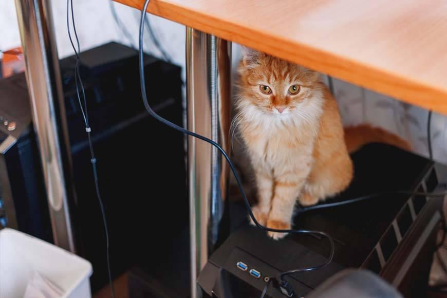 6 способов отучить кошку грызть провода