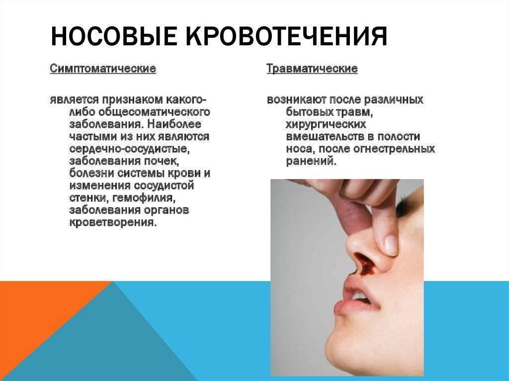 У кота кровь из носа: причины и диагностика
