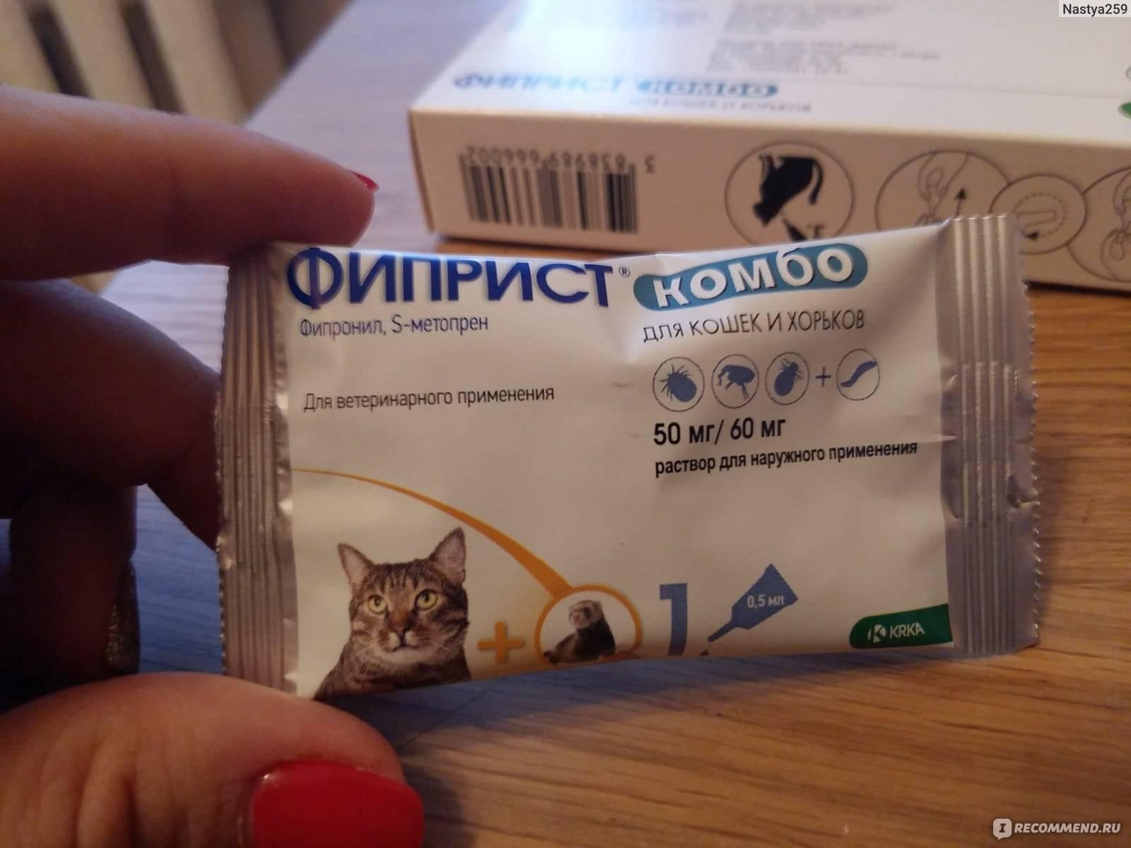 """Виды паразитов у кошек, эффективные способы борьбы   блог ветклиники """"беланта"""""""