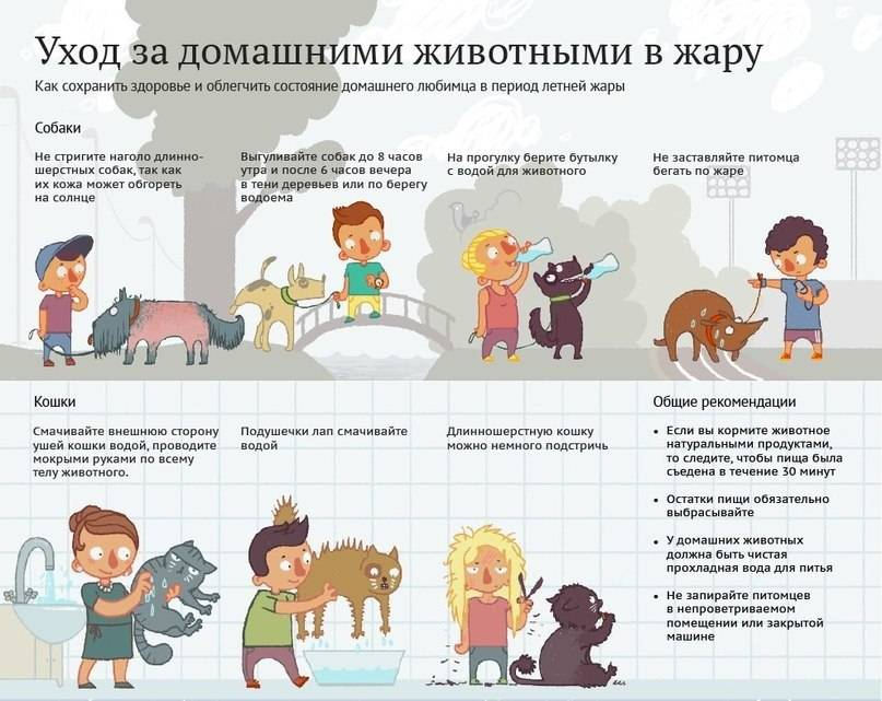 Как ухаживать за собакой в домашних условиях