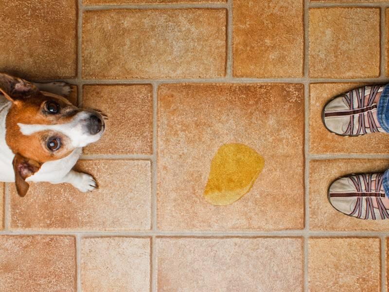 ᐉ как отучить кобеля метить в квартире – собака дома метит что делать - zoomanji.ru