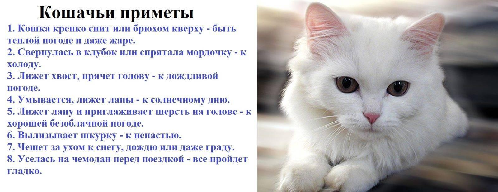 Как оставить котенка одного дома и можно ли?