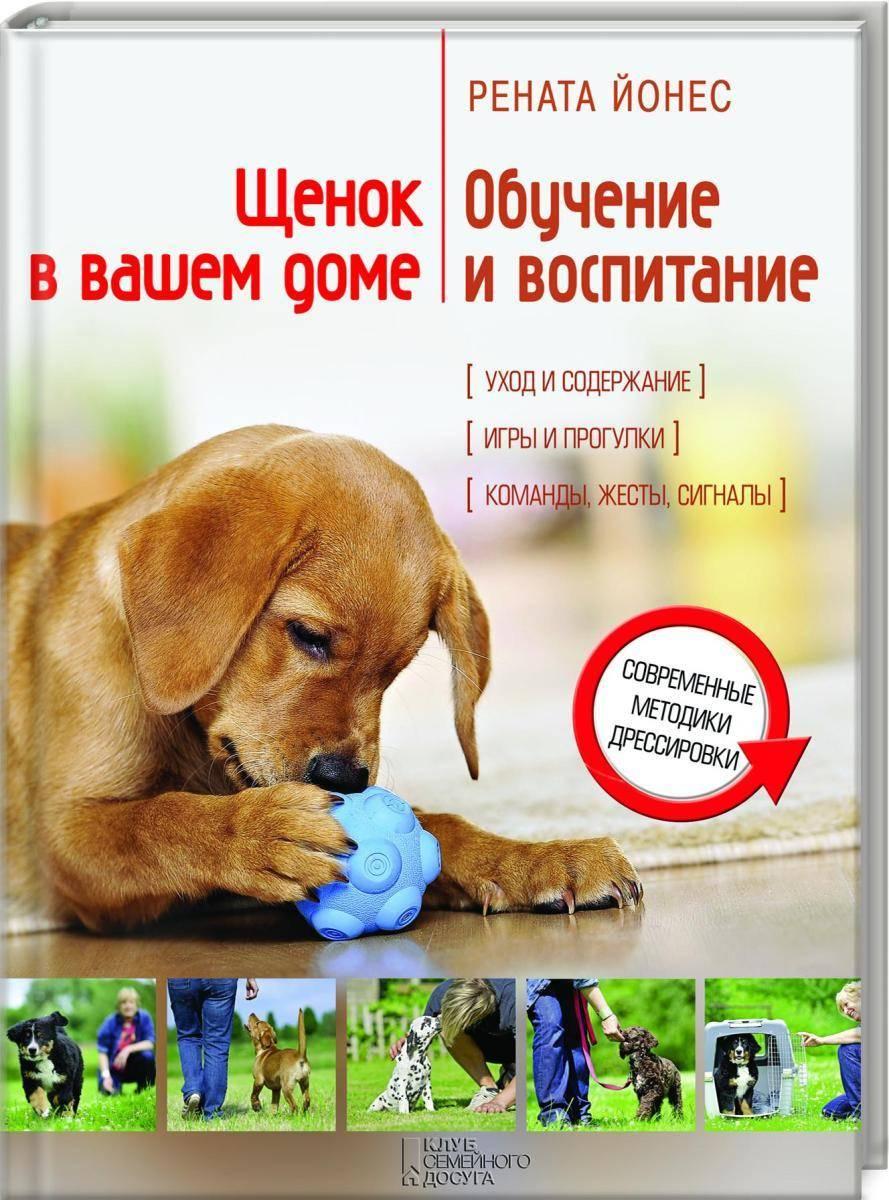 Как правильно воспитывать собаку - лайфхакер