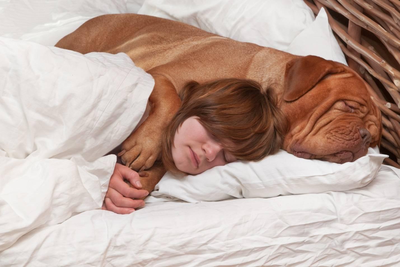 Сон в постели с собакой: вред и польза