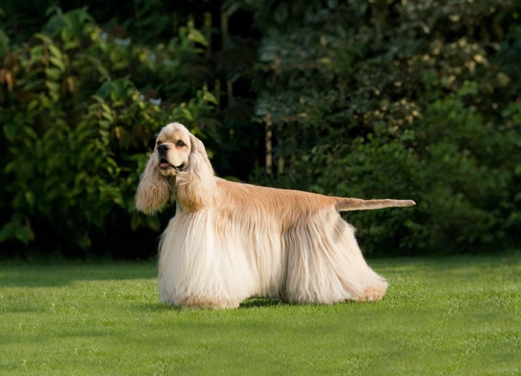 Какие породы собак считаются компаньонами