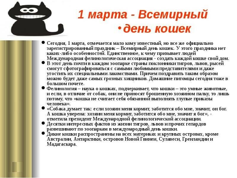 День кошек в россии и международный день кастрации животных — 2017: как отмечают