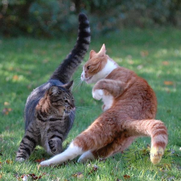 Когда агрессия кошки в игре переходит границы?