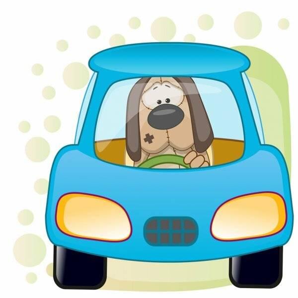 Таблетки для собак от укачивания. что делать, если собаку укачивает в машине?