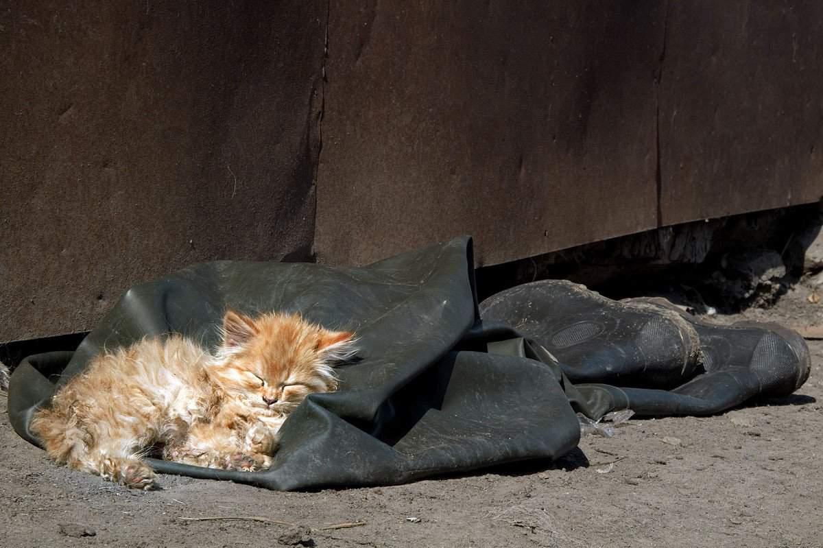 Кот съел пакет: что делать кот съел пакет: что делать