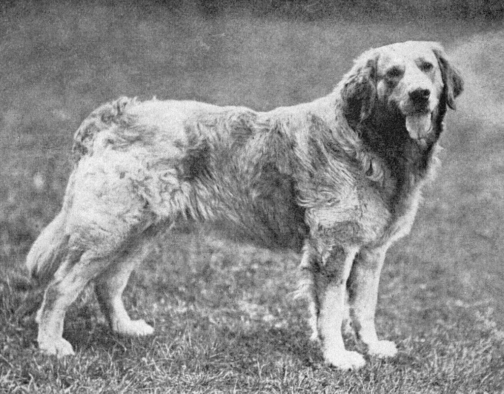 Породы собак, которых больше нет