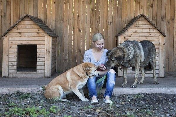 Как приучить собаку к будке: порядок приучения, чего делать нельзя