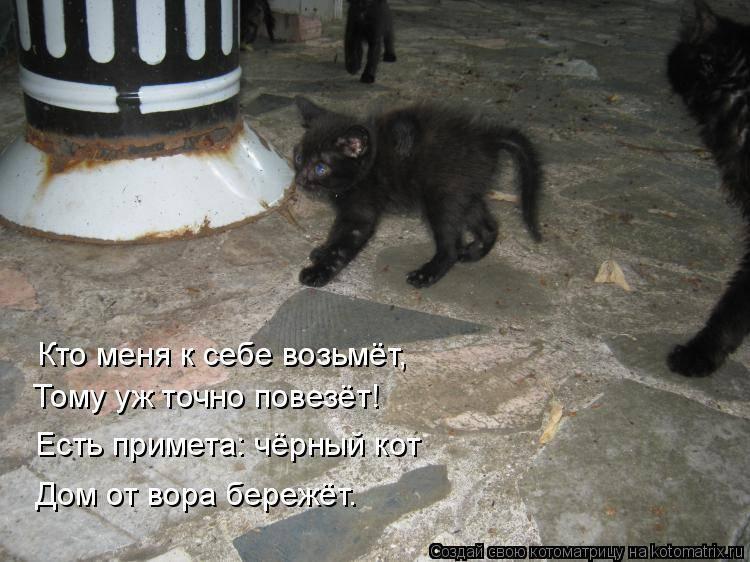 Кошка пришла в дом примета: к чему это и что делать