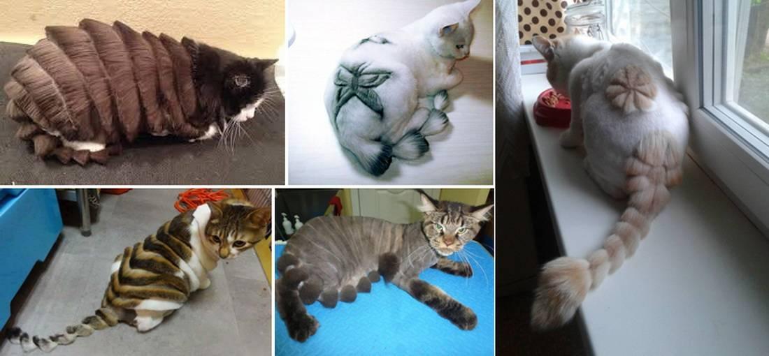 Как подстричь кота в домашних условиях: технология процесса с использованием машинки и ножниц