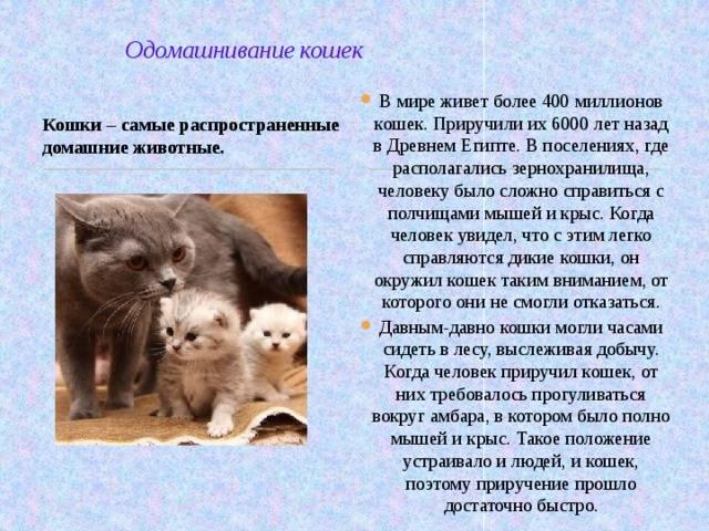 Топ-10 диких кошек, которых лучше не держать в домашних условиях