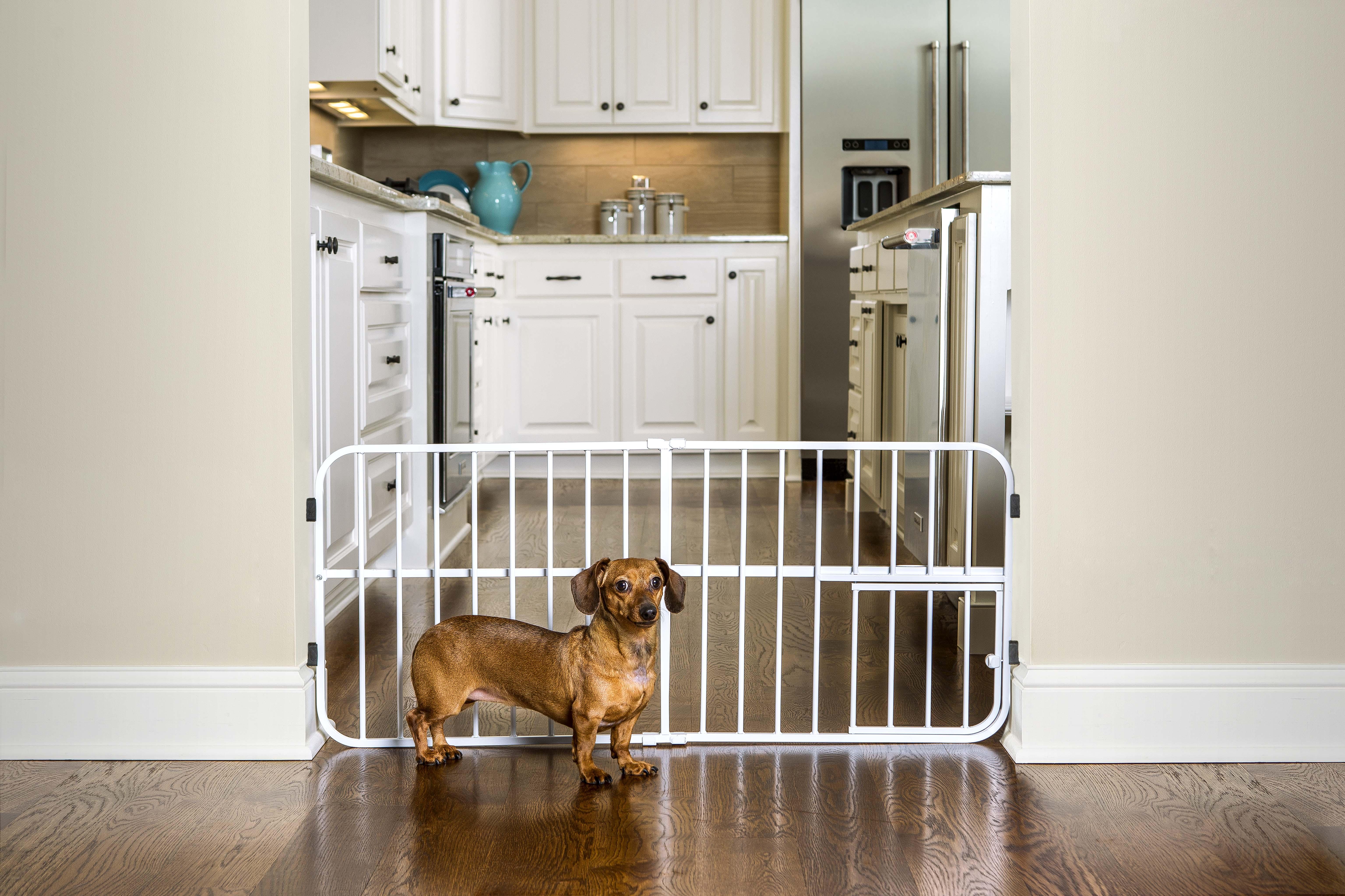 Домик для собаки в квартиру: советы по выбору