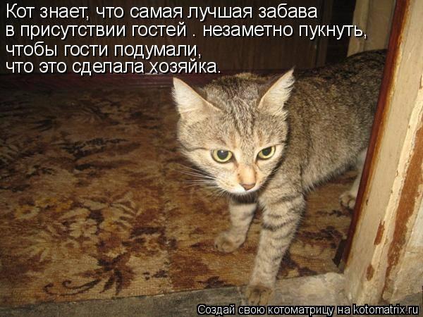 Умеют ли кошки плакать - причины слез - kotiko.ru