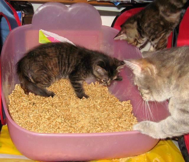 Кошка гадит в неположенном месте: как отучить и что делать чтобы отвадить