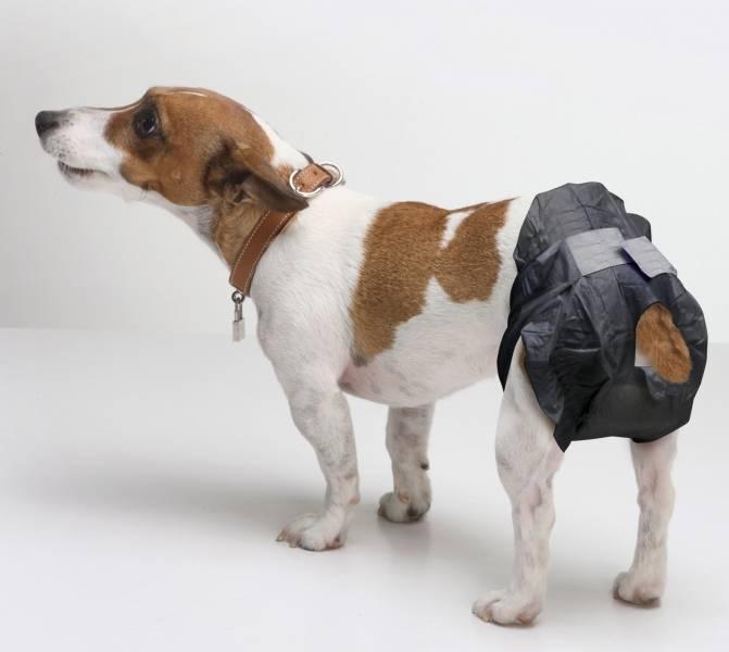 Породы самых неприхотливых собак и правила их выбора