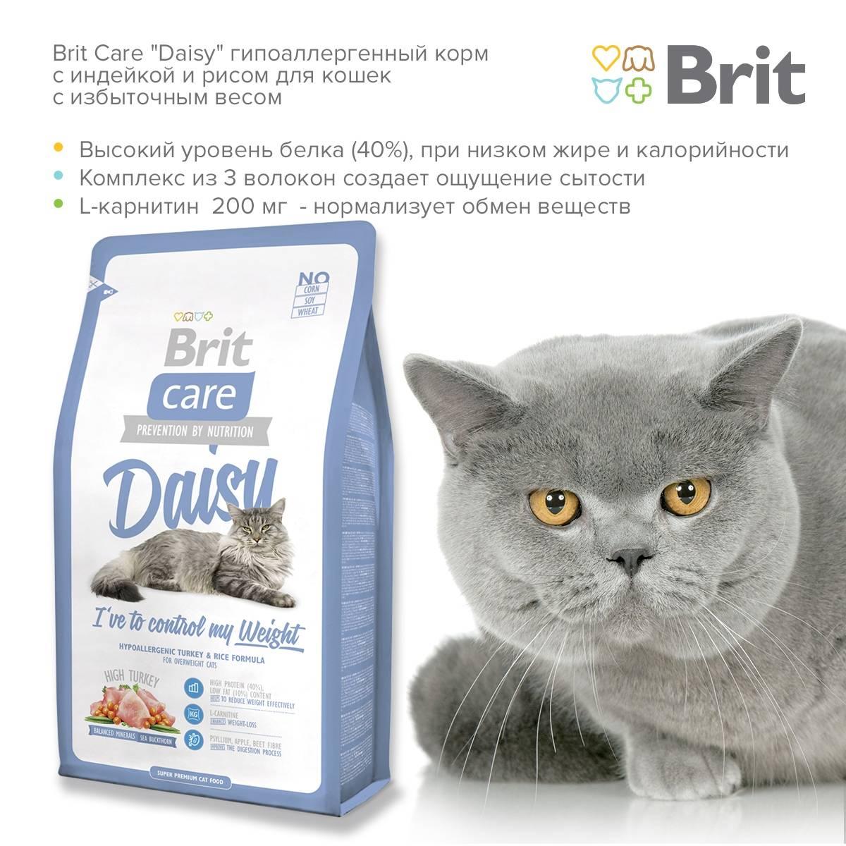 Лучшие корма для кошек, топ-10 рейтинг хороших кошачьих кормов