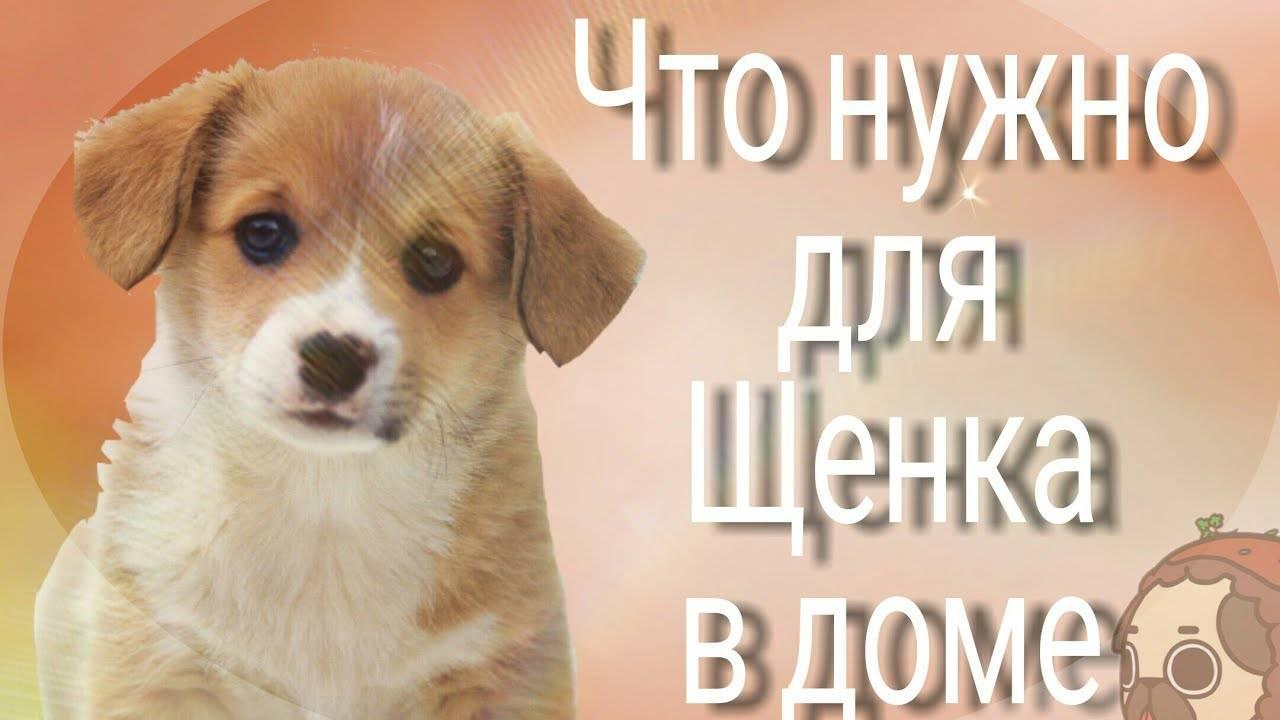 Берете собаку? что нужно купить для щенка: список