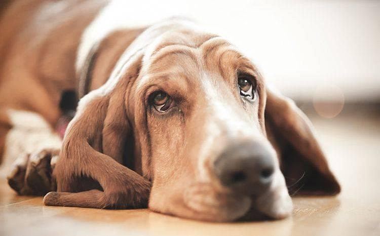 Ощущение заложенности в ушах: причины   компетентно о здоровье на ilive