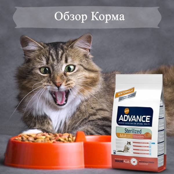 Корм advance для кошек
