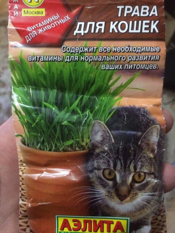 Трава для кошек: какую любят, польза, как вырастить