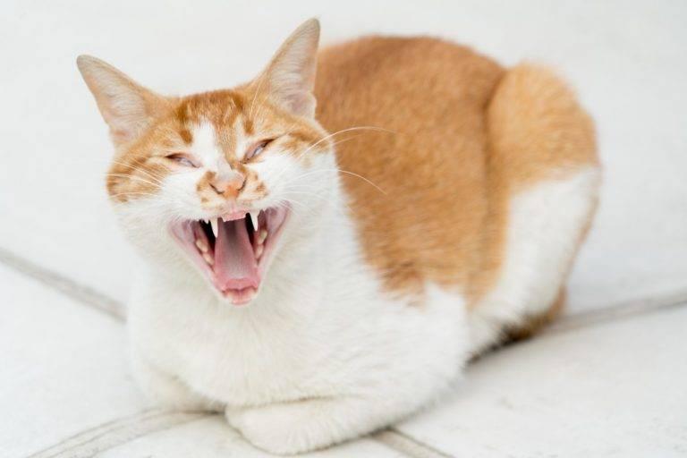 Кошка орет по ночам, что делать?