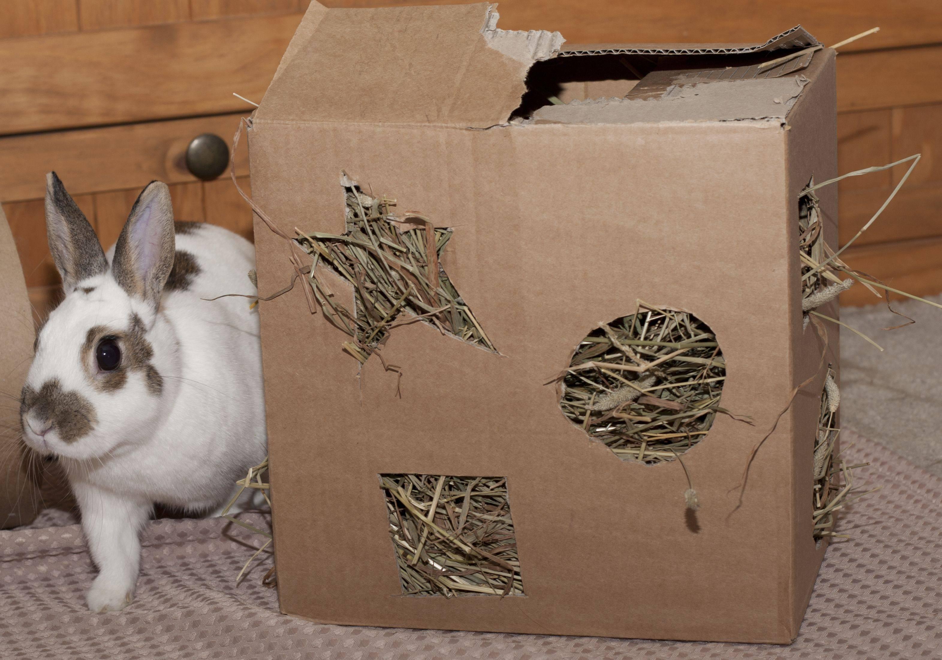 Крольчатник (49 фото): как сделать клетку для кроликов своими руками по чертежам? размеры мини-ферм в 2 яруса и других моделей, оригинальные идеи постройки