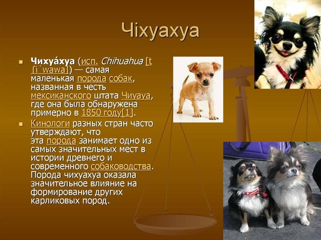 Клички для дворняги: русские и другие имена, которыми можно назвать щенков-дворняжек мальчиков и девочек