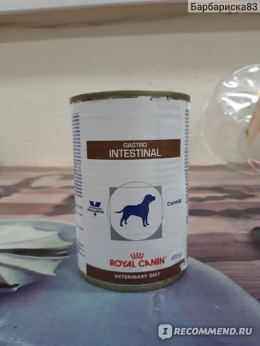 Корм royal canin gastro intestinal - описание, состав, виды и отзывы :: syl.ru
