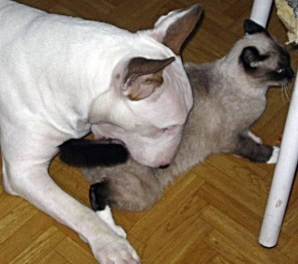 Как успокоить кошку в домашних условиях