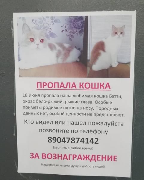 Что делать если пропал кот?