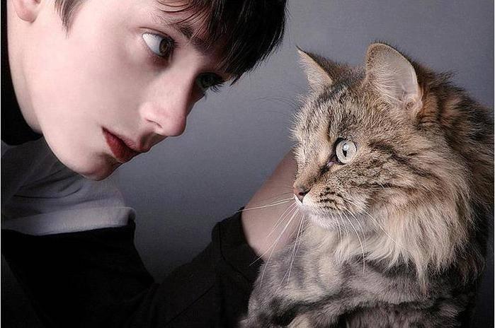 Глухота у кошек: что делать, причины, симптомы