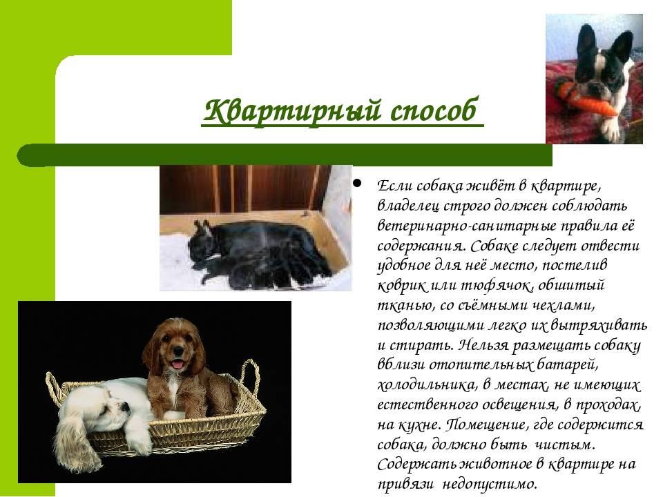 Отношение церкви к содержанию собак в квартире