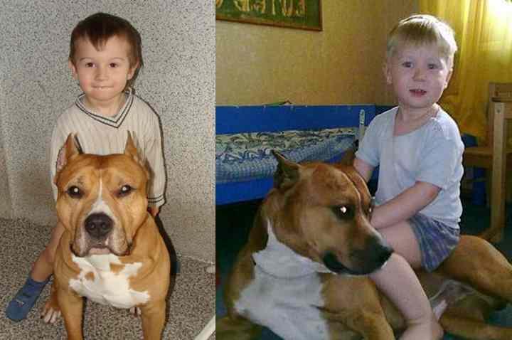 Стафф: собака-убийца или преданный друг?