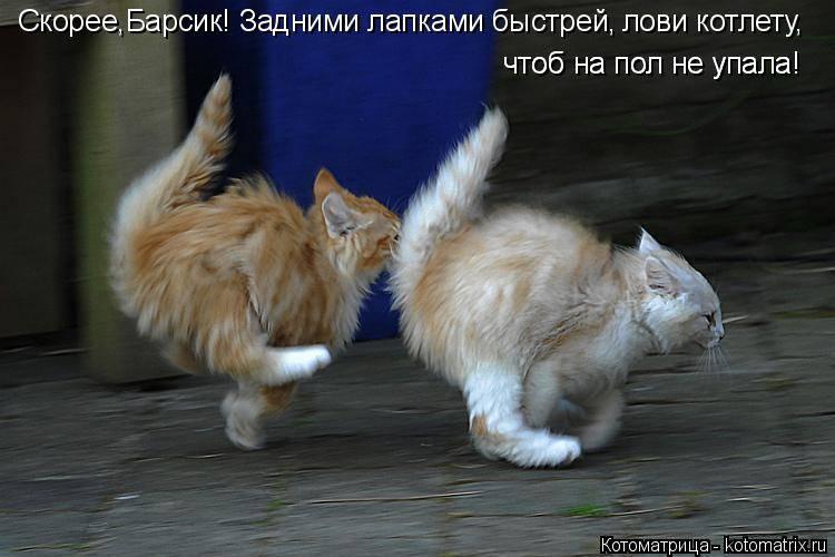 Весь вечер кот зажимал хвост между лап: поняла, что утром поедем к ветеринару