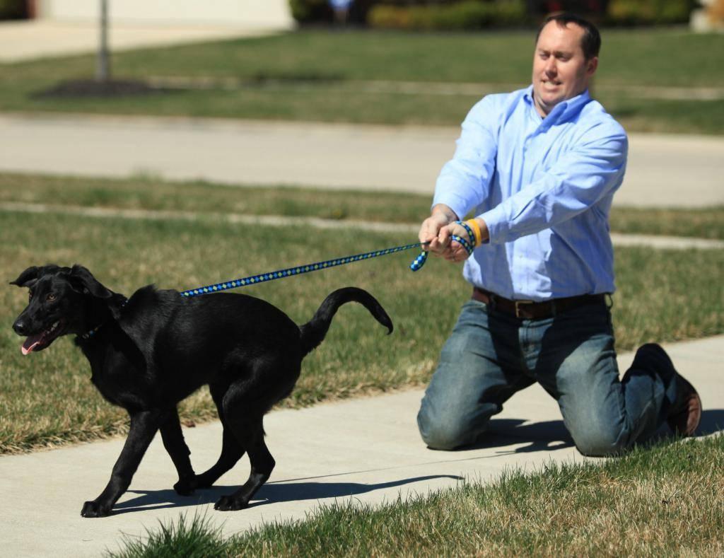 10 упражнений отучить собаку тянуть поводок