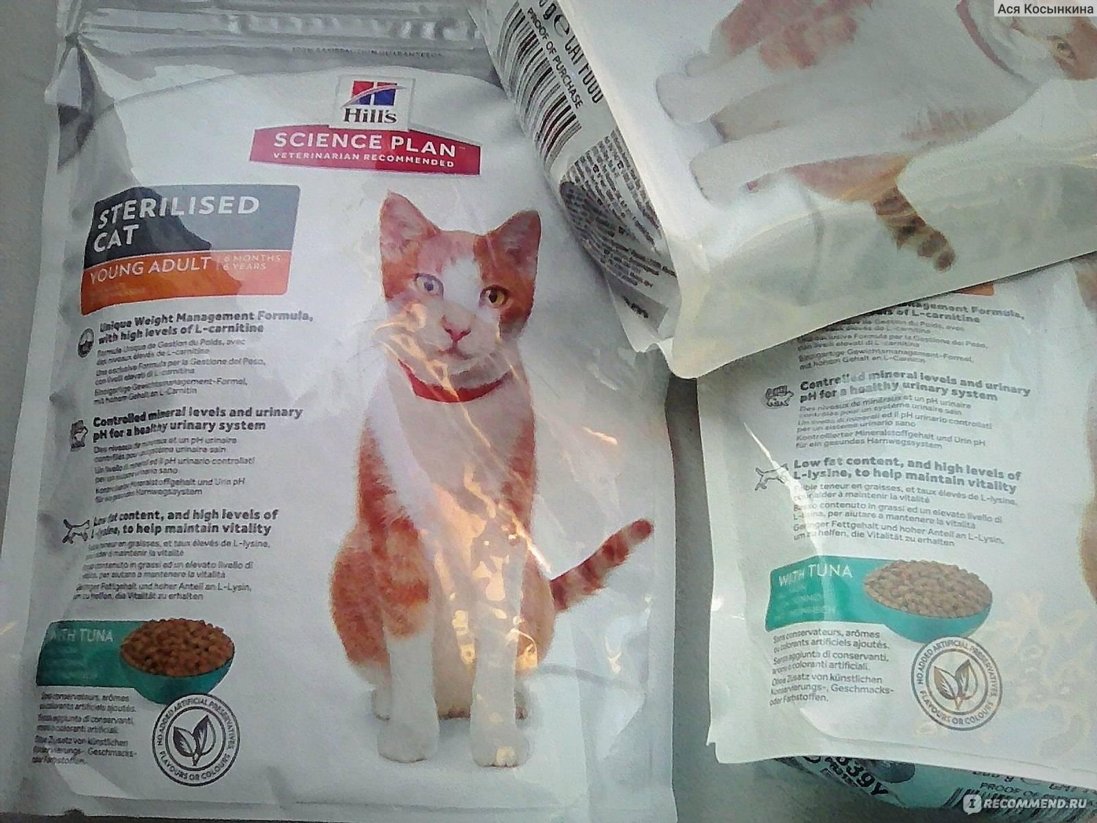 Чувствительная кожа и пищевая аллергия у кошек | хиллс