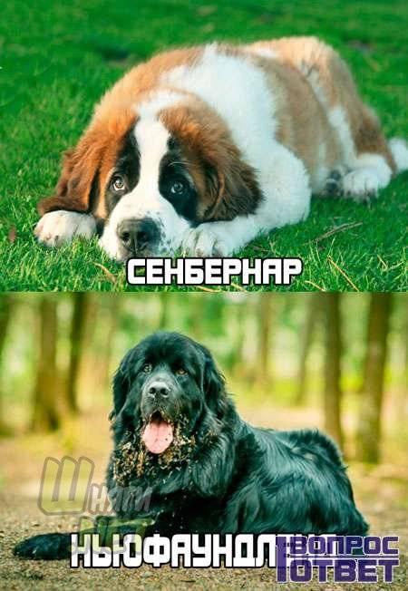 Самые умные собаки в мире: определение интеллекта, рейтинг самых умных пород собак с подробным описанием