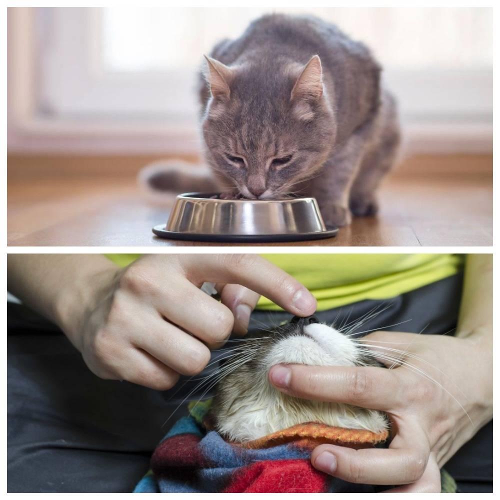 Как дать кошке таблетку от глистов: какие и когда давать