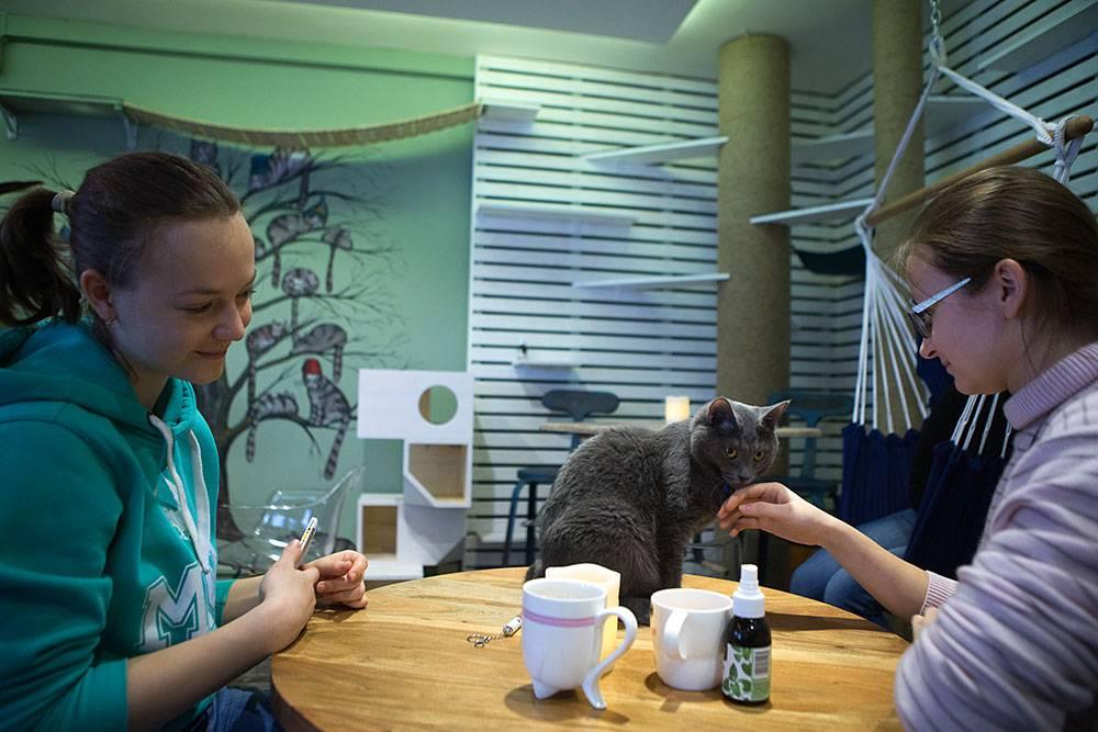 Все котокафе и кафе с совами, ежами и зайцами москвы: адреса на карте и цены за минуту
