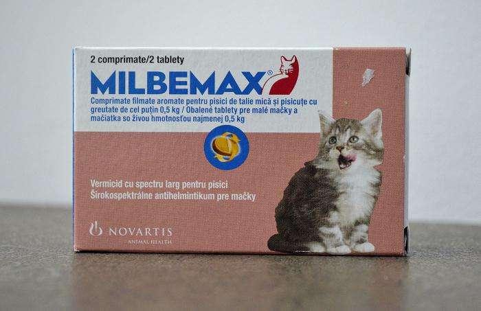 Обезболивающие для кошек в домашних условиях: разрешенные препараты