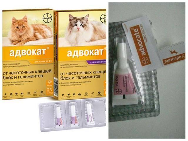 Капли от блох или как не дать съесть насекомым кошку, помогаем животному своими руками