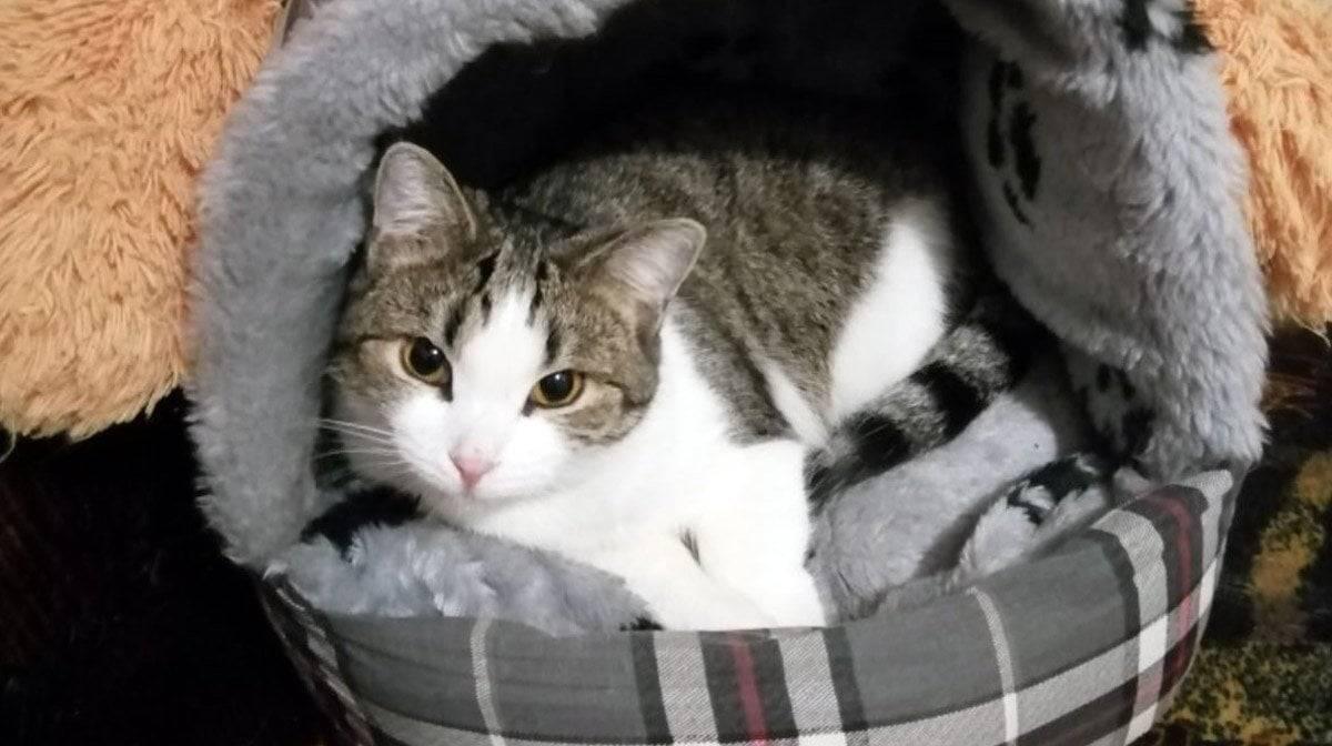 Новая кошка в доме, где уже есть животные