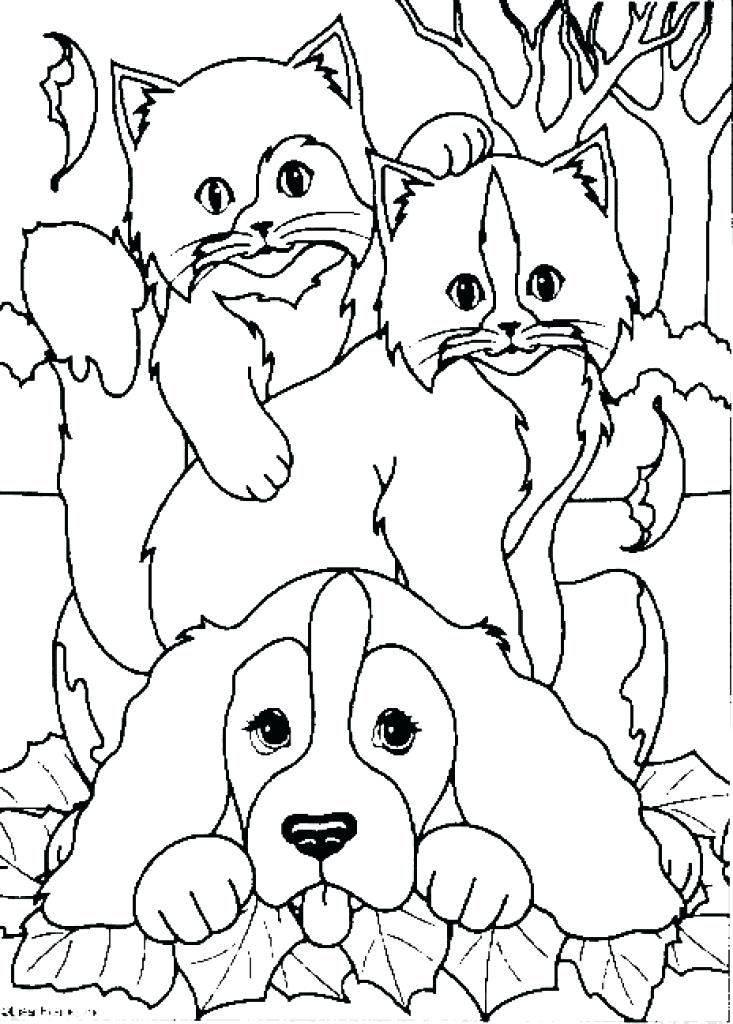 Раскраски кошка и собака