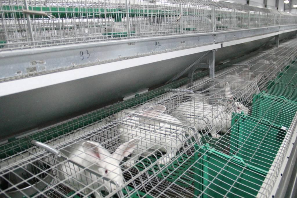 Разведение кроликов как бизнес выгодно или нет: рентабельность фермы, как заработать в домашних условиях